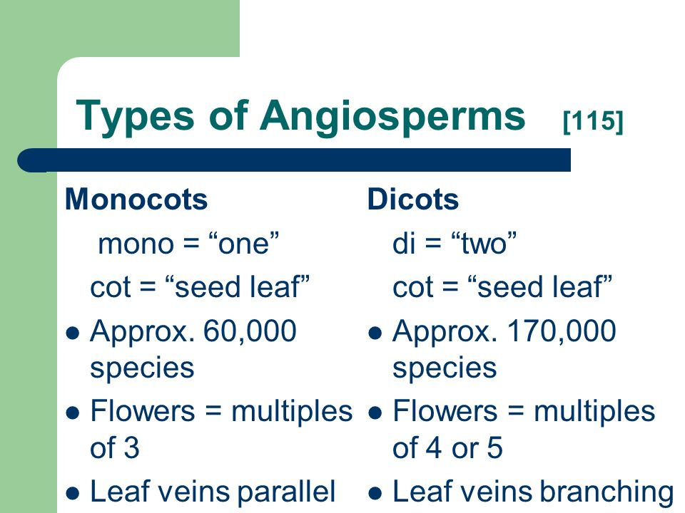 Types of Angiosperms [115]